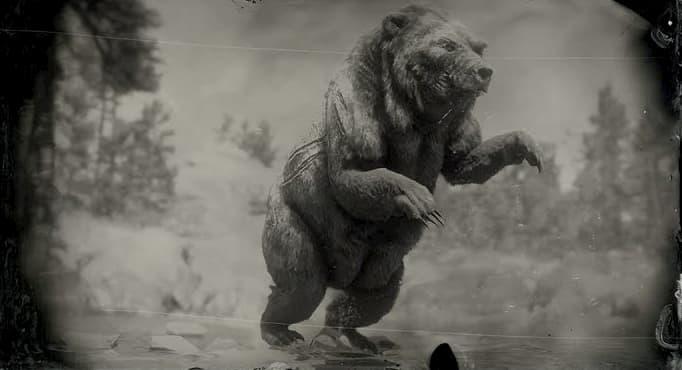 Image en noir et blanc d'un ours sur ses pattes arrière