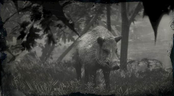 Image en noir et blanc d'un sanglier avec des cicatrices sur son visage.