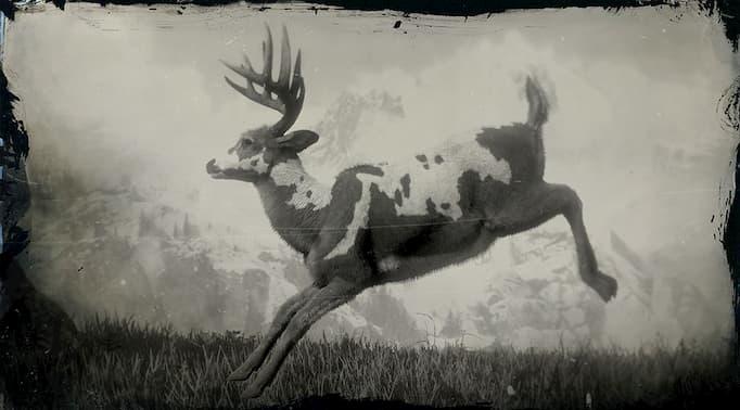 Image en noir et blanc d'un buck piebald sautant.