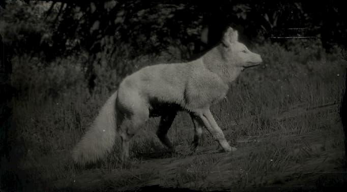 Image en noir et blanc d'un renard blanc sur une pente.