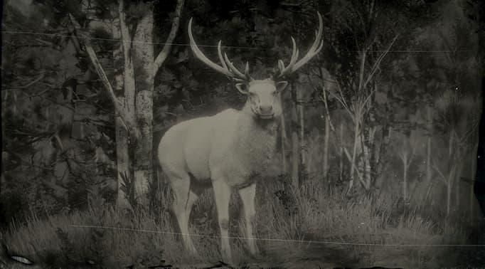 Image en noir et blanc d'un wapiti blanc.