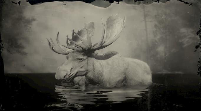 image en noir et blanc d'un orignal blanc dans l'eau.