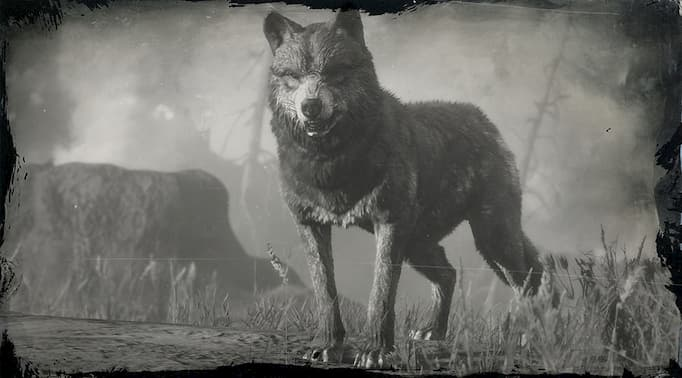 Image en noir et blanc d'un loup
