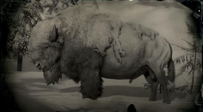 Image en noir et blanc d'un taureau de bison blanc